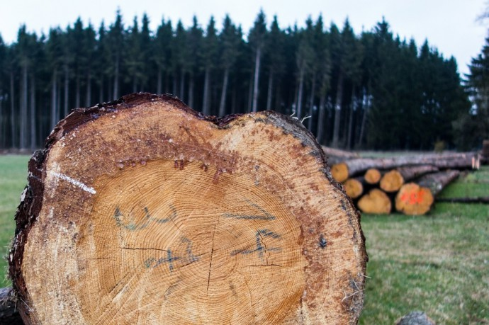 木材資源のイメージ写真