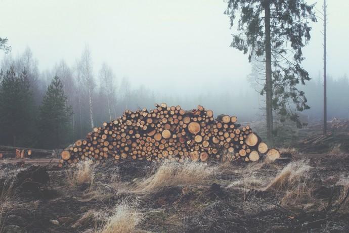森林資源のイメージ写真