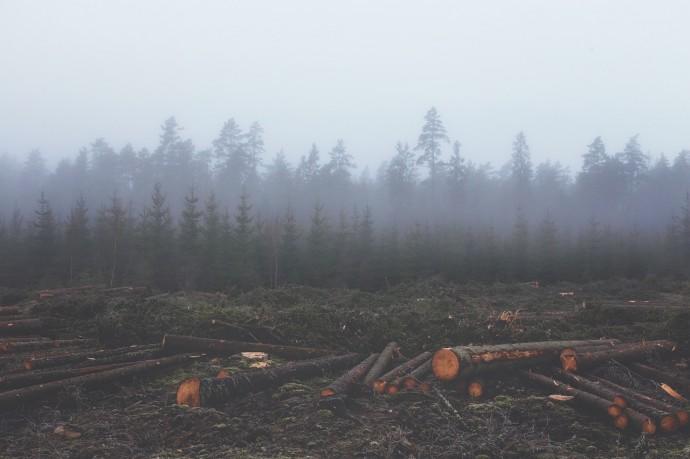 森林資源の写真
