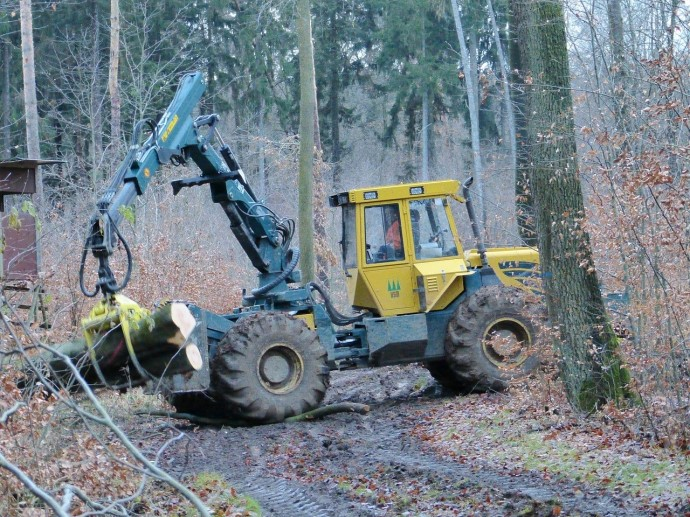 樹木伐採の写真