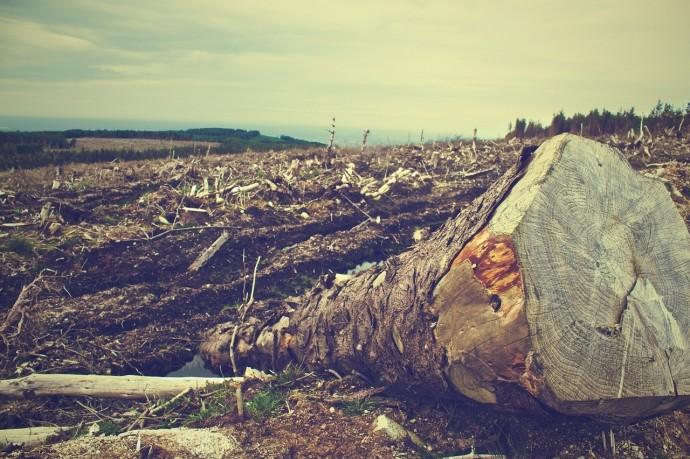 間伐材の写真